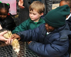 Funded city farm