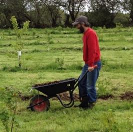 Tom O'Kane  pushing a wheelbarrow